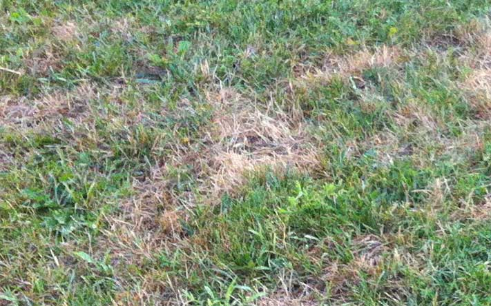 Yards archives yardsom for How to fix dog urine spots on lawn